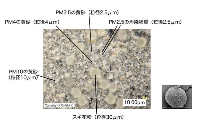 【デジタル顕微鏡の図、サイズごとの黄砂、花粉との比較】【採取フィルターの写真、白と黒日による違い】